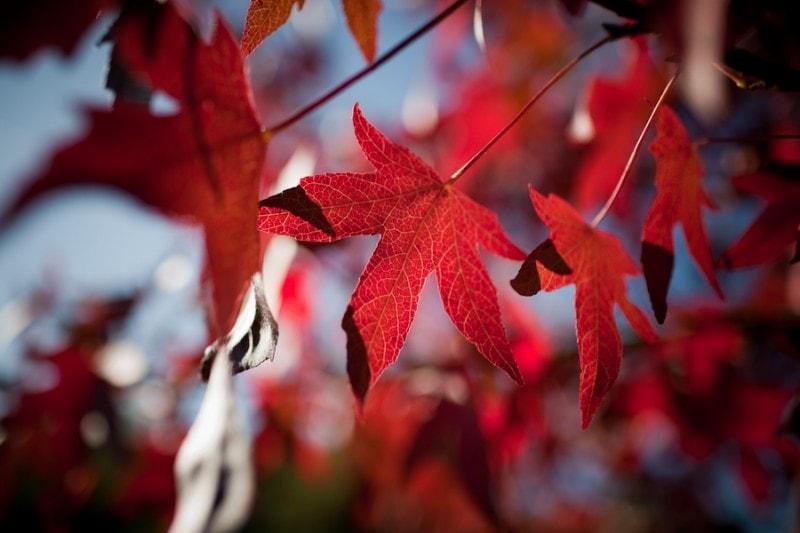 Rood en licht