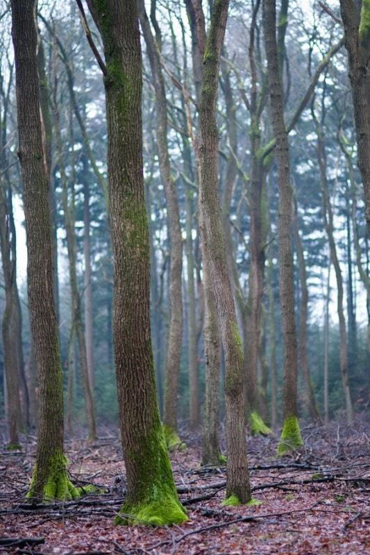 De bomen hebben sokjes aan
