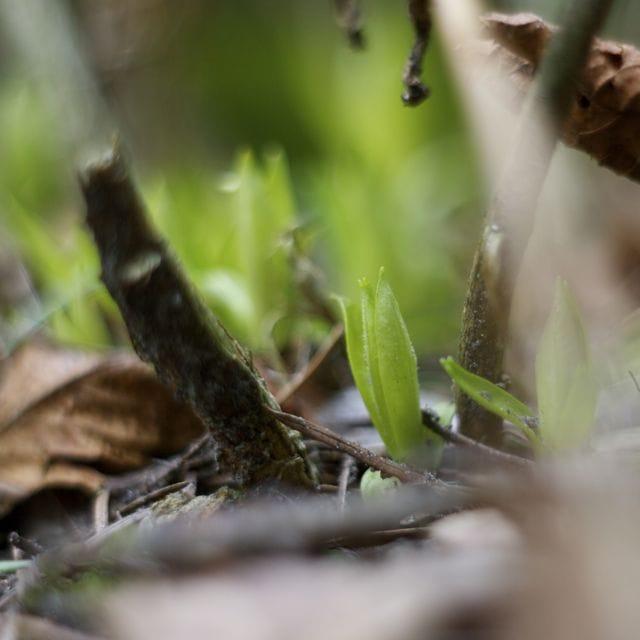 Groene blaadjes
