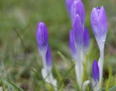 BETIFO: Kleine voorjaarsbodes