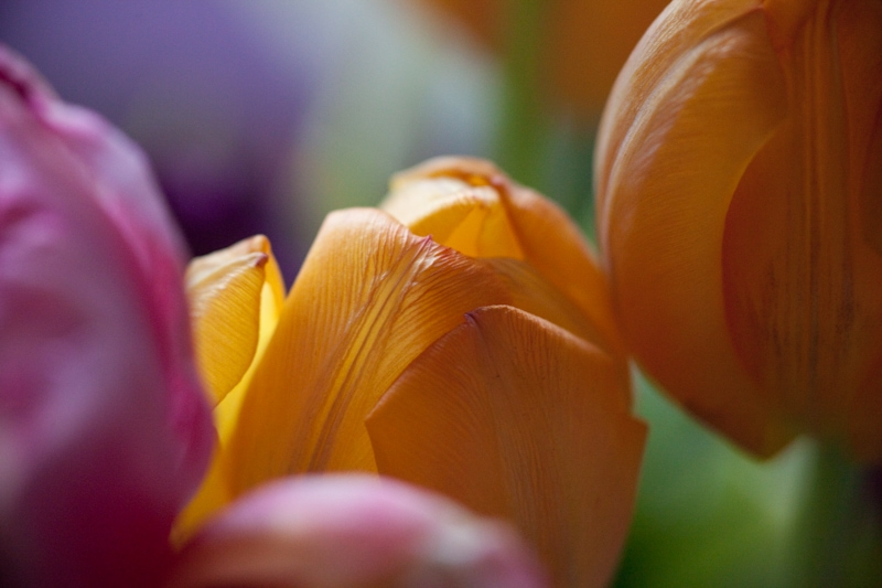 tulpenkleuren