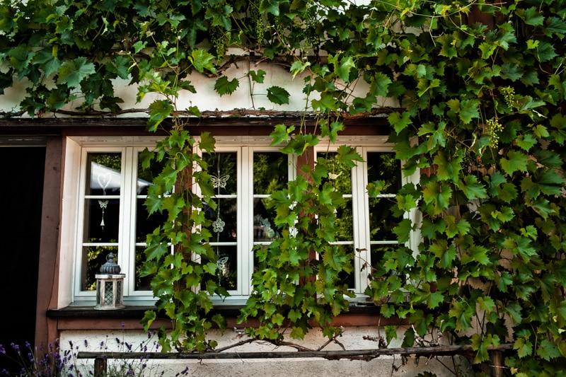 Vakantie is de druiven zien groeien.